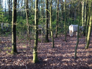 Blonde damens in het bos